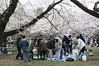 Hanami2013